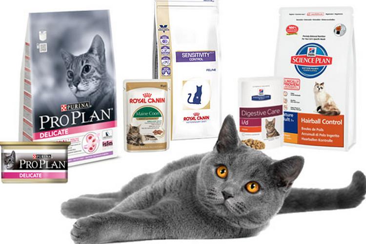 Какой сухой корм лучше для кота – название