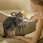 Почему кошки топчут человека лапками, мурчат, выпускают коготки