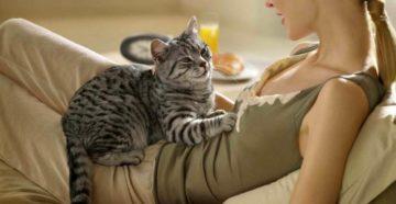 Почему кошки топчут нас лапками с когтями и мурчат