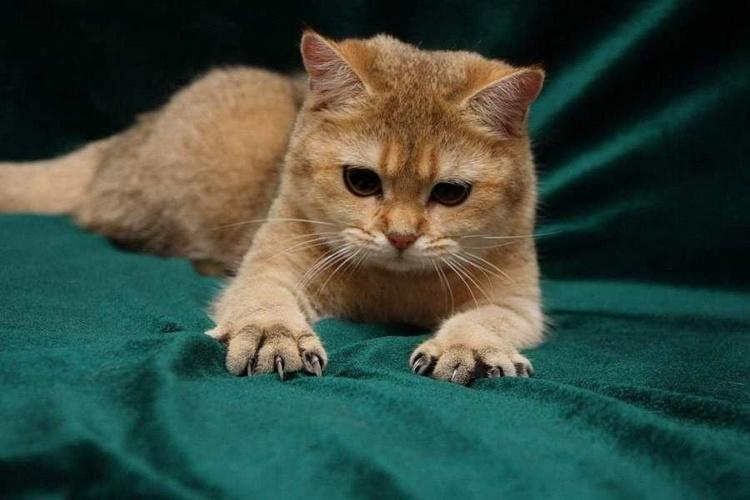 Почему кошки топчут нас лапками, выпуская когти