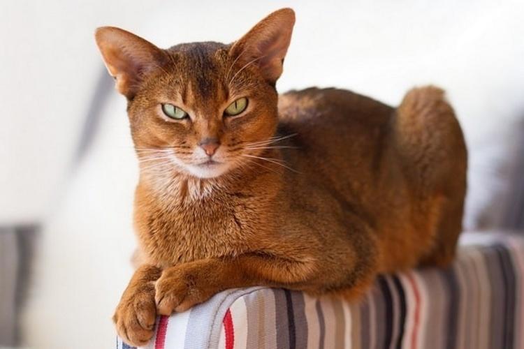 Правда ли, что кошки видят потусторонний мир
