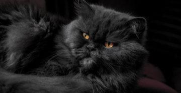 Видят ли кошки потусторонний мир