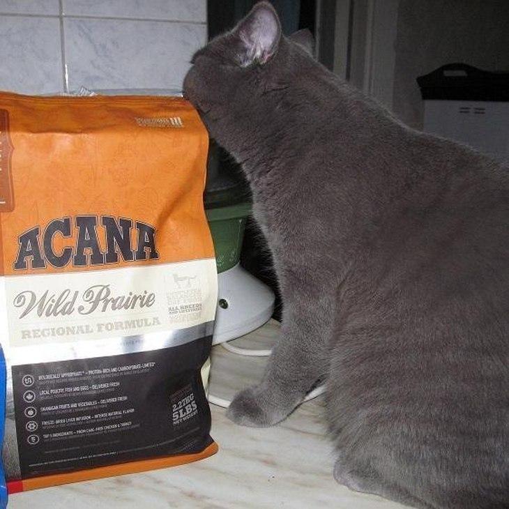 Корма для кошек Acana