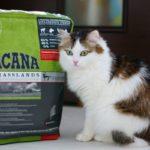 Корма для кошек Acana – оправданный выбор